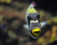 Resultado de imagen de peces
