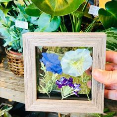 3 Flowers in 1 Keepsake Cube = Flower Power!YES, it's time to get your flower on. A perfect flower keepsake that comes in a small box. This pressed botanical cube fits into any location, from office desks to window sills, this pressed flower keepsake can even be housed on a bedroom nightstand! #pressedflower #botanical #keepsake
