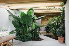Galería de ¿Qué es el plantscaping? - 38