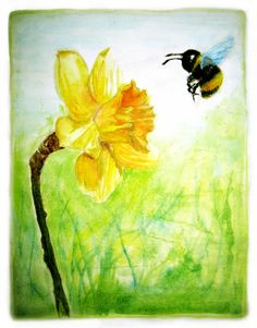 Daffodil -by pdchua2@deviantART