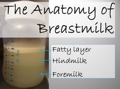 Anatomy of Breastmilk The difference between hindmilk and foremilk in breastmilk and the making sure baby gets both important parts. Breastmilk Facts, Breastmilk Storage, Newborn Needs, Newborn Baby Care, Baby Baby, Baby Life Hacks, Breastfeeding Accessories, Practical Parenting, Baby On A Budget