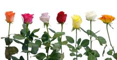 Florist in India, Send Flowers To India, Flowers delivery in India, Online flowers to India.