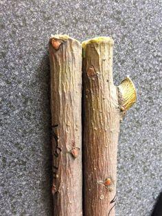 PP-E13 típúsú nemesített fűz vékony ágai (1-es és 2-es számú) külső felületének redőzöttsége szárítás után