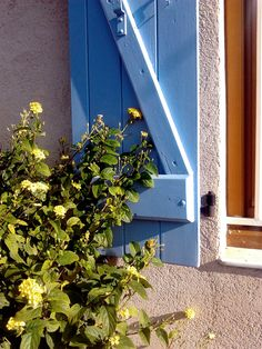 window blue and yellow flowers (France)