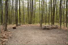 Awenda Provincial Park Ontario Canada Ontario Parks, Canada, Outdoor Decor, Plants, Plant, Planets