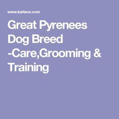 Great Pyrenees Dog Breed -Care,Grooming & Training