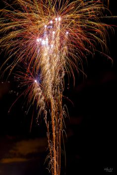 Dandelion, Flowers, Plants, Fireworks, Fotografia, Dandelions, Plant, Taraxacum Officinale, Royal Icing Flowers