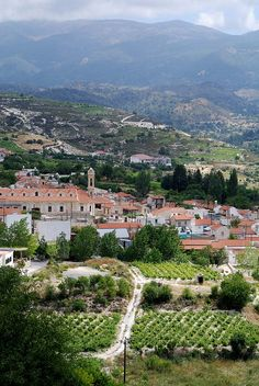 Aux alentours d'#Omodos, à #Chypre, alternent #oliviers et #vergers.