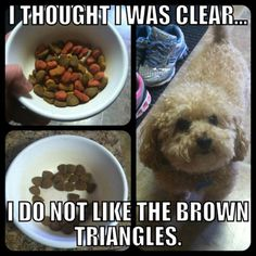 Animal Pictures That Will Make You LOL