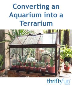 This guide is about converting an aquarium into a terrarium. When your fish tank is worn out or you do not need it anymore, recycle it into a controlled environment for plants or reptiles. Terrarium Diy, Fish Tank Terrarium, Aquarium Terrarium, Water Terrarium, Fish Tank Garden, Aquarium Garden, Diy Aquarium, Aquarium Ideas, Begonia
