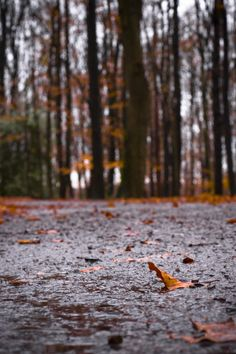 What's to know about wet leaves &