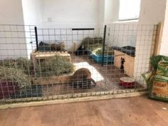Indoor Housing – Rabbit Welfare Association & Fund (RWAF)