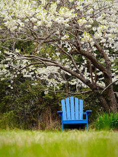 A Fragrant Place to Sit by David Street