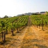 Donelan Family Wines Releases Acclaimed 2010 Fall Vintage