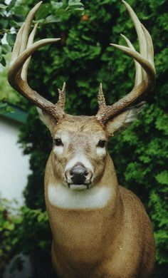 Bambi's Father