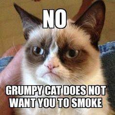 Make Grumpy Cat happy. Quit smoking this summer. Our groups are a great way to get started. www.quitgroups.com/group-schedules #quitsmoking