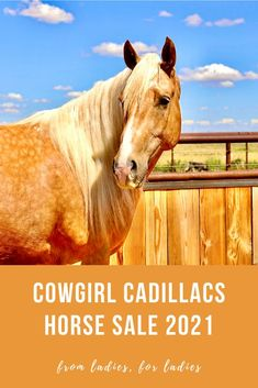The 2021 Cowgirl Cadillacs horse sale presented by COWGIRL magazine will feature another set of gentle, classy, fancy-broke horses consigned exclusively by women.