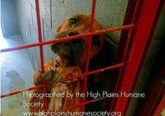 A foto de uma cachorrinha registrada com lágrimas nos olhos dentro de uma gaiola de um abrigo em Portale, no estado de New México, nos Estados Unidos, sensibilizou a muitas pessoas pelo mundo. As informações são do site 'Animais Sensacionais'.