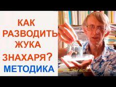 Как Легко Разводить Жука-Знахаря Для Корма Рыбкам,  Entomologist in Ukraine
