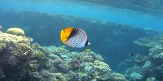 Coral Reef Pictures, Marine Fish, Pets, Animals, Animales, Animaux, Animal, Animais, Animals And Pets