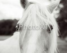 Eyes are soul of a horse print by on Etsy Horse Photography, Horses, Eyes, Animals, Animais, Animales, Animaux, Horse Photos, Animal