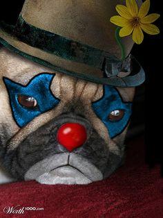 Pug clown
