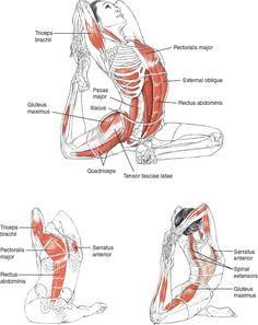 La Inspiración de Yoga - la F de E de N de E de B I S de T - Estimula los órganos internos; - Estiran profundamente la superabundancia; - ingles de Extensión y psoas (un músculo largo sobre el lado de su columna vertebral y pelvis); - Relevan afectó piriformis y aliviar el dolor ciático; - Ayudan con desórdenes urinarios; - Ofrecen la liberación emocional.