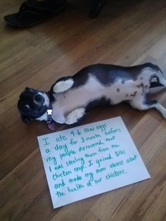 A collection of the best dog shaming photos