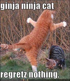 Cats are amazing hunters. It's no wonder these kitties are real ninja cats! Check them out here. I Love Cats, Crazy Cats, Cool Cats, Funny Cats, Funny Animals, Cute Animals, Animals Images, Baby Animals, Chat Maine Coon