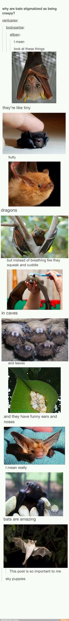 Bats are so cute!!!