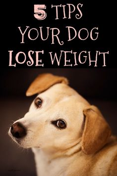 5 tips your dog lose weight
