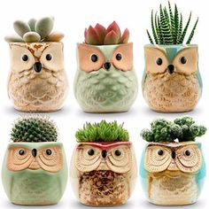 Jomass Owl Pots Inch,Flowing Glaze Succulent Pots,Owl Planter/Mini Ceramic Pots,Small Flower/Plant/Cactus/Bonsai Container with Hole Cactus Plant Pots, Cactus Seeds, Succulent Pots, Planting Succulents, Planting Flowers, Planter Pots, Flower Gardening, Planting Seeds, Cacti