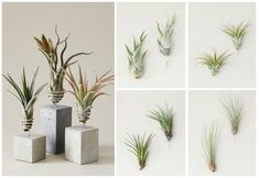 die besten 25 luftpflanzen pflege ideen auf pinterest luftpflanzen klimaanlagen terrarien. Black Bedroom Furniture Sets. Home Design Ideas
