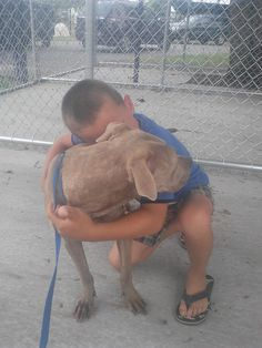 7-15-14: URGENT!! XENA ID#147231. PUREBRED AMERICAN PITBULL TERRIER;  BRINDLED FEMALE MEDIUM IN SIZE, SUCH A SWEET SWEET GIRL LOVES KIDS, VERY CALM AND STUNNING. WALKS VERY GOOD ON LEASH, LOVES ATTENTION PLEASE HELP. At Lake county animal services Tavares Florida. (352)343-9688. https://www.facebook.com/photo.php?fbid=859804510716262&set=a.369028219793896.105055.100000601641889&type=1&theater