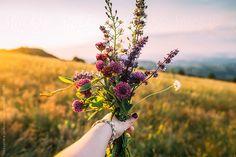 Flowers picked in the mountain by Aleksandra Jankovic
