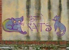 Star Walls - Scritte sui muri. — Felini