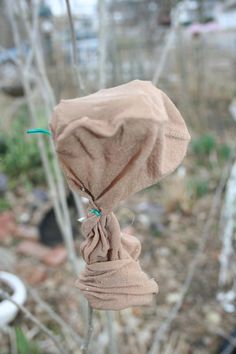 Use the footie from a pantyhose to cover seed heads if you are afraid they will split open before you have a chance to collect them.
