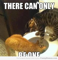 Only one  -T.K - http://animalfunnymemes.com/only-one-t-k/