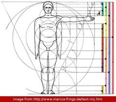 golden ratio in anatomy - Google Search