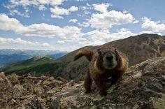 Colorado + 14,000 feet above sea level