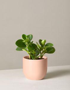 Best Indoor Plants, All Plants, Live Plants, Potted Plants, Indoor Herbs, Indoor Gardening, Cactus Plants, Winter Plants, Spring Plants
