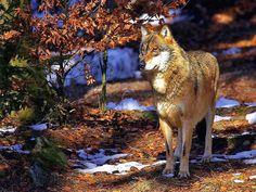 Download Wallpaper ID 446743 - Desktop Nexus Animals