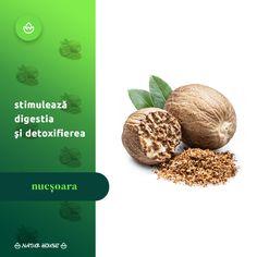 Deși nucșoara se folosește în cantități mici în alimentație, acest condiment oferă numeroase beneficii pentru sănătate, în special datorită conținutului de minerale și vitamine. Nucșoara stimulează digestia, are proprietăți analgezice și contribuie la procesul de detoxifiere al organismului. Natur House, Varicose Veins