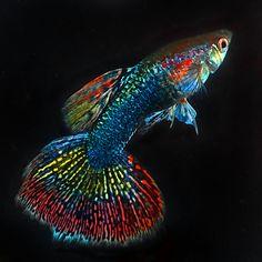 Am I Colorful ? | by Peem (pattpoom)