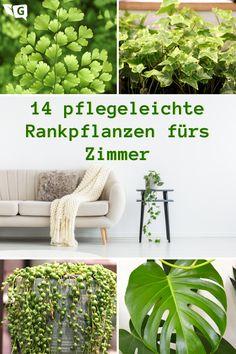 Herb Garden, Vegetable Garden, Home And Garden, Garden Renovation Ideas, Hydrangea Seeds, Indoor Gardening Supplies, Inside Design, Potting Soil, Go Green