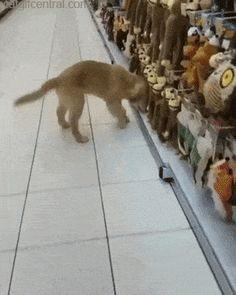 Choosing the Perfect Sock Monkey