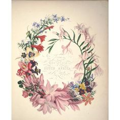 Flora of South Africa 1849 Title page Canvas Art - Arabella Roupell (18 x 24)