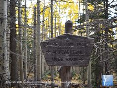 The beautiful Bear Jaw trail is the perfect #Flagstaff hike for any leaf peepers out there!