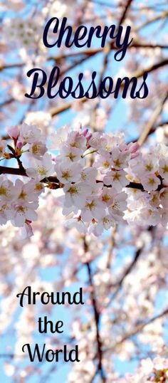 Where to See Cherry Trees in Spring Around the World- The Daily Adventures of Me - Travel Bucket List Destinations, Amazing Destinations, Travel Destinations, Asia Travel, Travel Usa, Travel Around The World, Around The Worlds, Travel Advice, Travel Tips