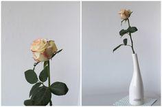 Tag der Rose TIZIANO Design